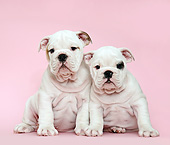 PUP 18 XA0003 01