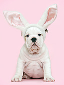 PUP 18 XA0006 01