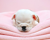 PUP 18 XA0007 01