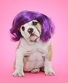 PUP 18 XA0009 01
