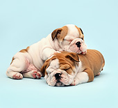 PUP 18 XA0010 01