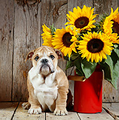 PUP 18 XA0012 01