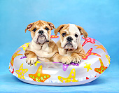 PUP 18 XA0015 01