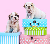 PUP 18 XA0016 01