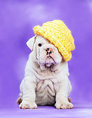 PUP 18 XA0018 01