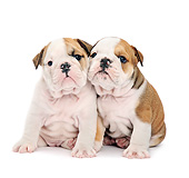 PUP 18 XA0023 01