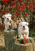 PUP 18 CE0001 01