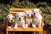 PUP 18 CE0005 01