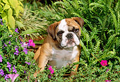 PUP 18 CE0006 01