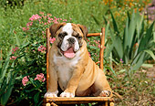PUP 18 CE0008 01