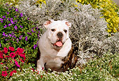 PUP 18 CE0010 01