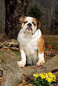 PUP 18 CE0011 01