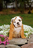 PUP 18 CE0012 01