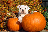PUP 18 CE0014 01