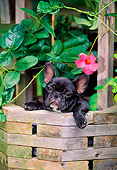 PUP 18 CE0023 01