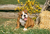 PUP 18 FA0002 01