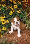 PUP 18 FA0003 01