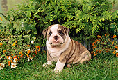PUP 18 FA0006 01