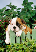 PUP 18 FA0008 01
