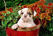 PUP 18 FA0009 01