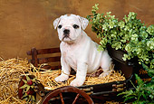 PUP 18 FA0010 01