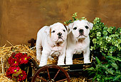PUP 18 FA0011 01