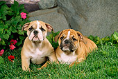 PUP 18 FA0013 01
