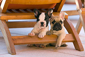 PUP 18 KH0001 01