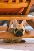 PUP 18 KH0002 01