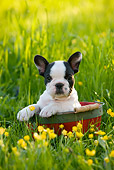 PUP 18 KH0004 01
