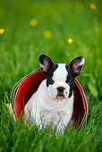 PUP 18 KH0006 01