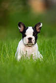PUP 18 KH0009 01