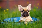 PUP 18 KH0010 01
