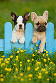 PUP 18 KH0013 01