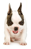 PUP 18 MR0005 01