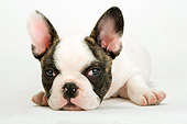 PUP 18 MR0006 01