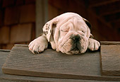 PUP 18 RC0001 01
