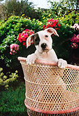 PUP 18 RC0002 01