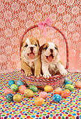 PUP 18 RC0003 01