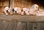 PUP 18 RC0006 01
