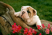 PUP 18 RC0007 01
