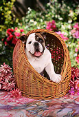 PUP 18 RC0022 01