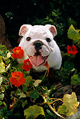 PUP 18 RC0023 01