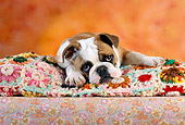 PUP 18 RC0025 01
