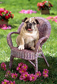 PUP 18 RC0028 01