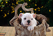 PUP 18 RC0029 01