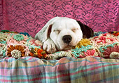 PUP 18 RC0031 01