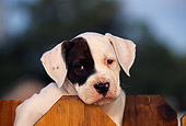 PUP 18 RK0002 10