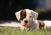 PUP 18 RK0007 06