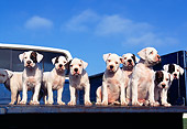 PUP 18 RK0014 56